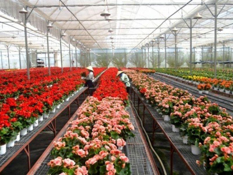 Tuyển 2 Nữ trồng Hoa trong nhà Kính