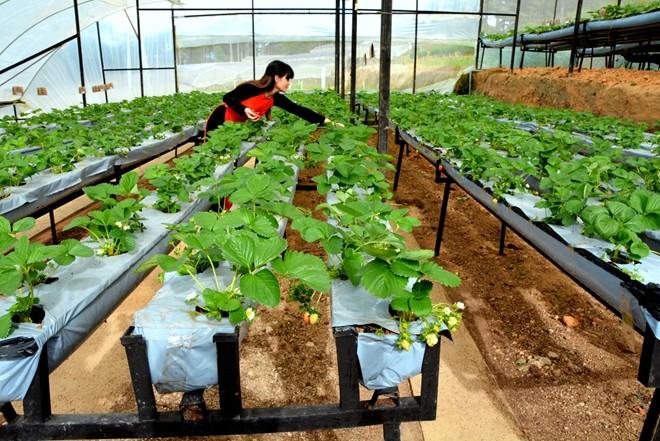 Tại sao nên đi xuất khẩu lao động Nhật Bản ngành nông nghiệp?